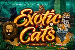 Neuer Online Spielautomat für Katzenfreunde